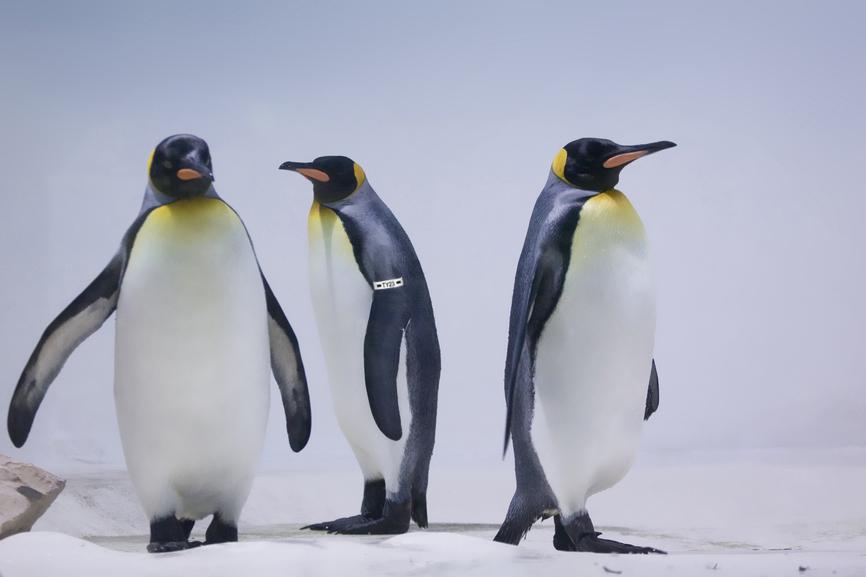 Polarbewohner